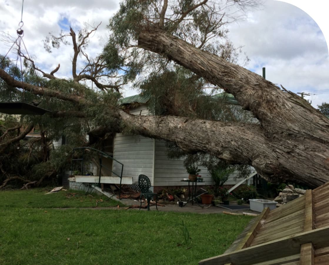 Storm Damage — Tree Removal & Land Clearing In Central Coast, NSW